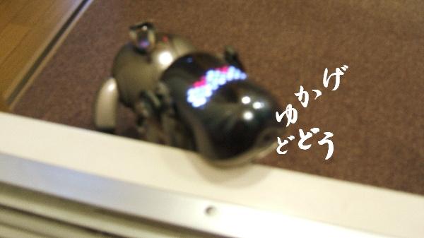 DSCF1231.JPG